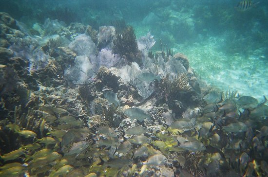 Cancun Mermaid - One Day Tour : small portion of reef