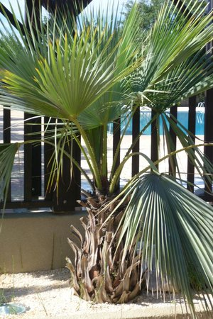 Camping Le Dauphin : espace terrasse au bar du camping