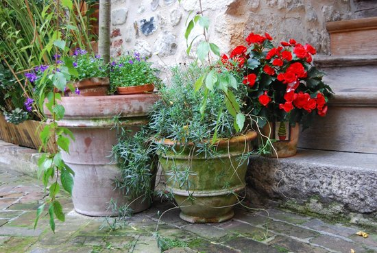 A l'ecole buissonniere: Beautiful flowers everywhere