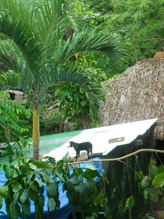 La Mariposa Spanish School and Eco Hotel: Cat on a Hot Tin Roof
