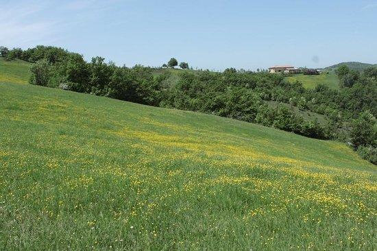 il Parco di Montebello dalla strada per Canossa