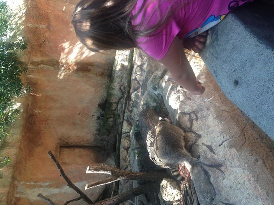 Ellen Trout Zoo: Raccoons
