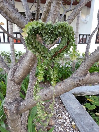 Novotel Samui Resort Chaweng Beach Kandaburi: Beautiful gardens