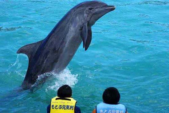 Motobu Genki Village : Meet the Dolphins