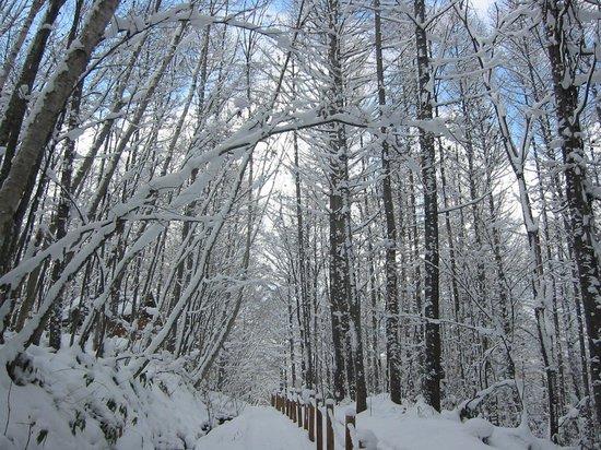 Morinotokei : 2011年11月は大雪