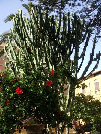 B&B Villa Pirandello: giardino villa pirandello