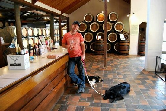 Must Love Dogs B&B & self contained cottage: Taking the dogs to Campbell's Winery