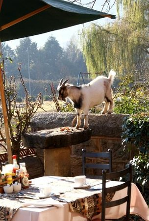 Lake Clarens Guest House : Goat on bird feeder