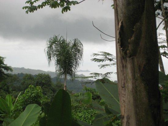 Oxygen Jungle Villas: Desde la habitación