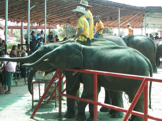 Elephant Study Center Surin