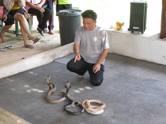 Elephant Study Center Surin: 蛇のショー