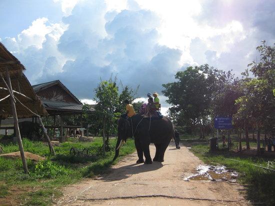 Elephant Study Center Surin: 象ライディング
