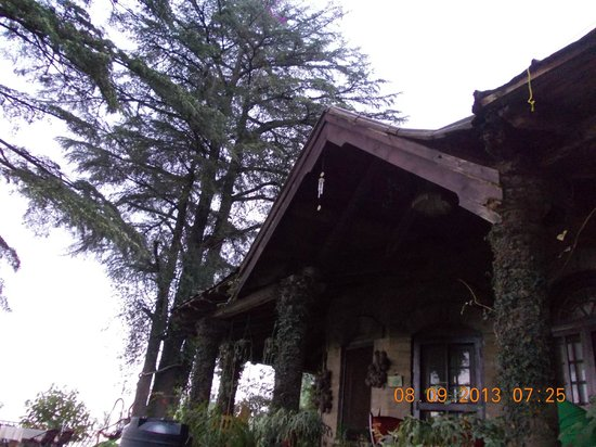 Deodar's Guest House: The tall Deodar Trees above the Cottage