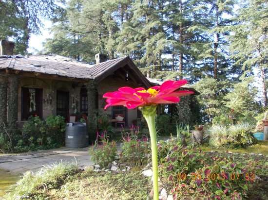 Deodar's Guest House: Taken by my daughter again