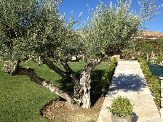 La Bastide St Georges : Olive tree
