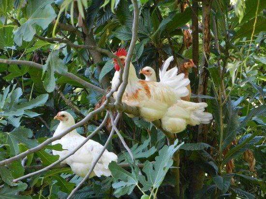 Agriturismo L'Unicorno: het liefelijke van loslopende kippen.