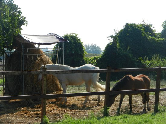 Agriturismo L'Unicorno: de rust van de paarden.