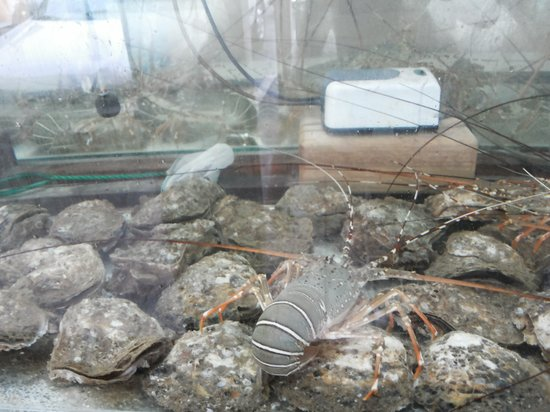 Sin Soon Lee Seafood: Life Lobster & Life Oyster