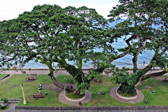 Dumaguete City, Philippines : These are my favorite trees.