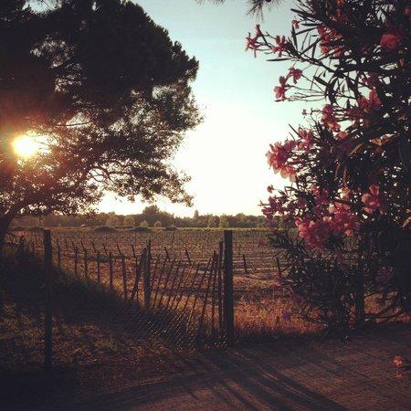 Oliveraie De Paul : Vue sur les alentours