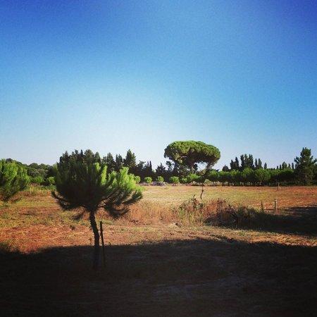 Oliveraie De Paul : Promenade dans la propriété