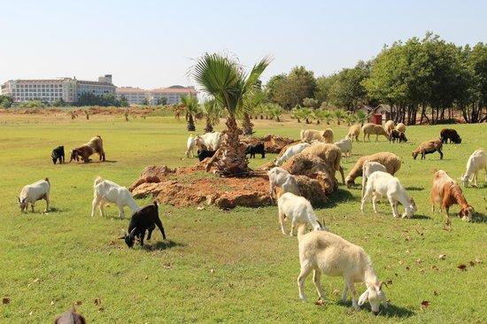 Felicia Village: Animals in the garden