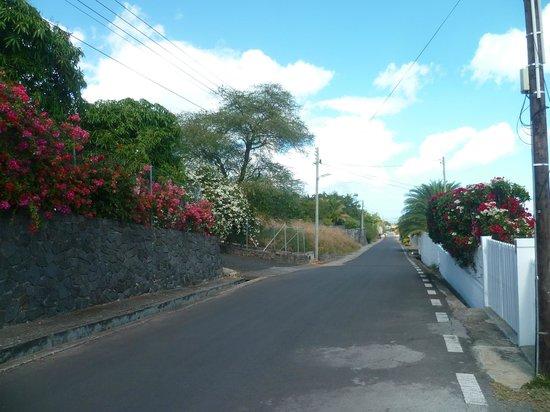 Terre et Mer Studios - Mauritius: L'allée des Tamariniers, calme et fleurie