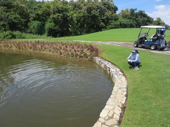 Alpine Golf Resort - Chiangmai: Feeding the fishes by a caddy