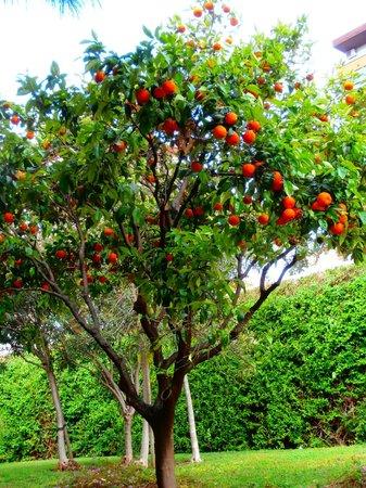 Hotel Beleret: Een sinaasappelboom in de Turia, de drooggelegde rivierbedding