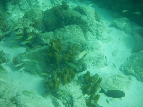 Aruba Marriott Resort & Stellaris Casino: Malmok beach snorkeling