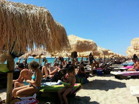 Samana Bed : Samanà Beach