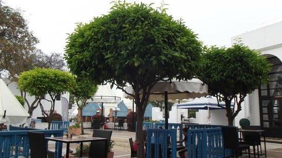 Agador Tamlelt: schöne bäume im hotelgelände