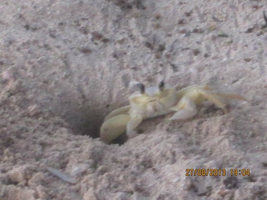 Bar-B-Barn: cute crab