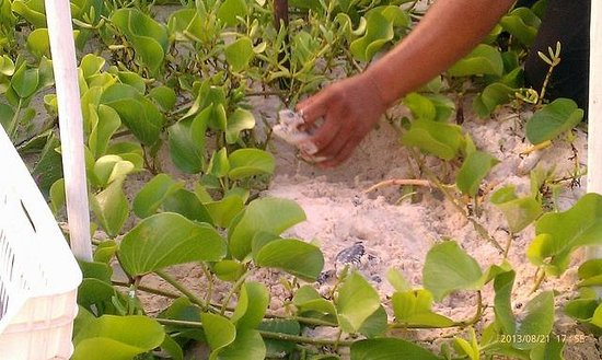 Maya Tulum Resort: Turtle hatch - pretty much right outside our room