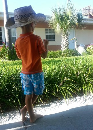 "Long Key Beach Resort & Motel: Local ""resident"", Charlie the Egret...he's spolied...only eats meat!"