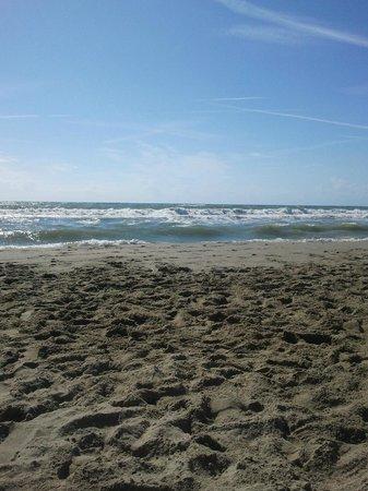 Hotel Roxy & Beach : spiaggia