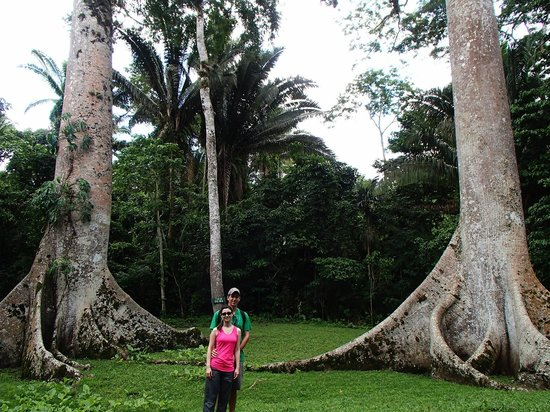 Belize Magnificent Mayan Tours: Between twin Ceiba Trees at Caracol -