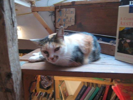 Atlantis Books : resident puss