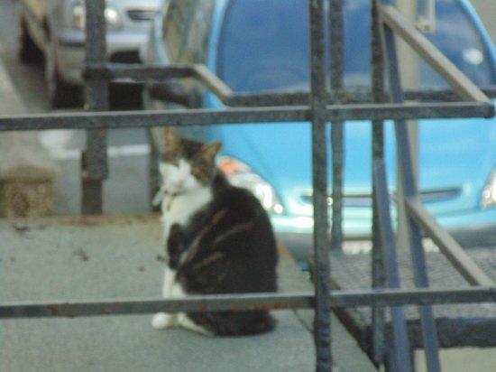 The Seashell Bed & Breakfast: resident cat