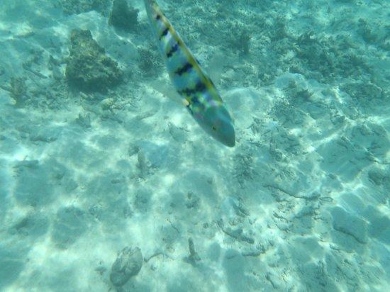 Vivanta by Taj Coral Reef Maldives: snorkeling