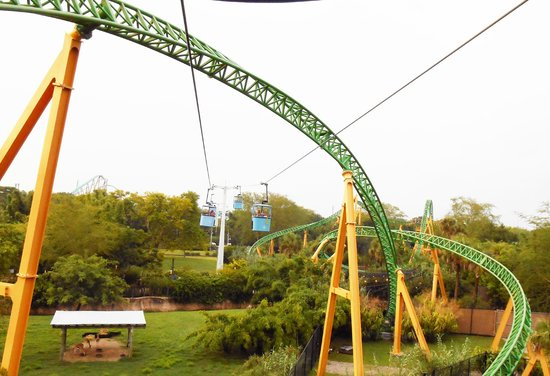 Cheetah Hunt Picture Of Busch Gardens Tampa Tampa