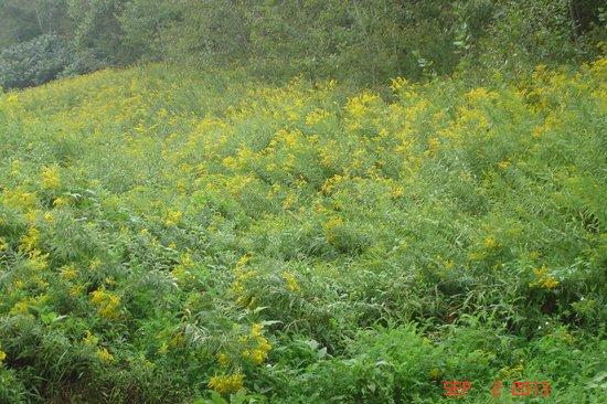 Callahan State Park: Beautiful Fields
