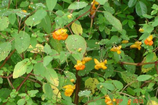 Callahan State Park : Wildflowers galore