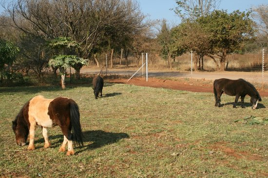 Kilimanjaro Country Lodge: friendly ponys on the grounds