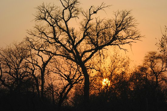 Kambaku Safari Lodge: Sunset in the bush