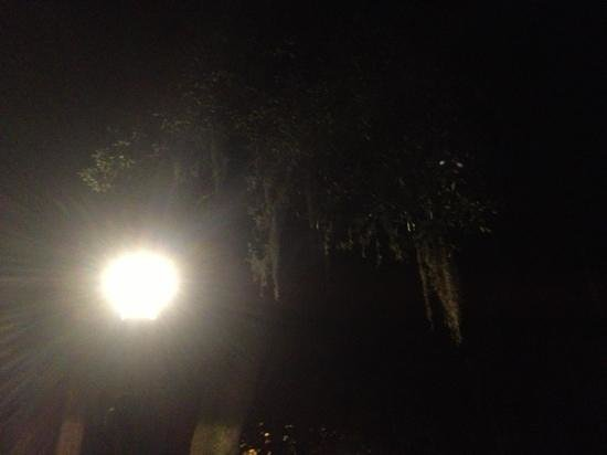 6th Sense World: wanted a picture of the Spanish moss at night and got a great surprise! two little orbs in the t