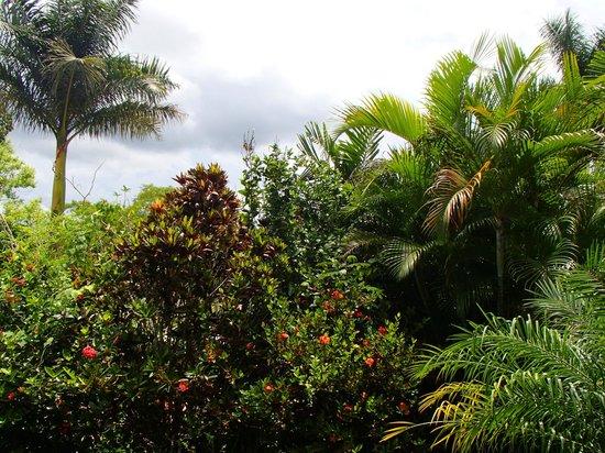 San Ignacio Resort Hotel: View from our balcony