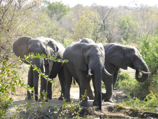 Honeyguide Tented Safari Camps: 3 elephants at the watering hole at the camp