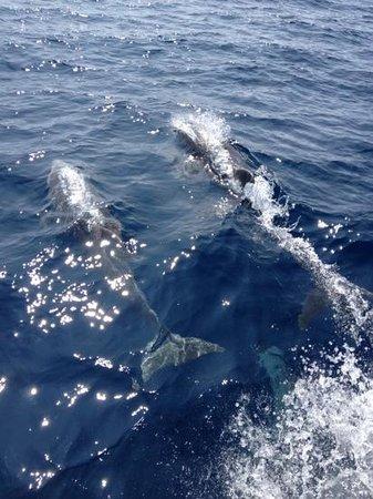 Delfinlandia