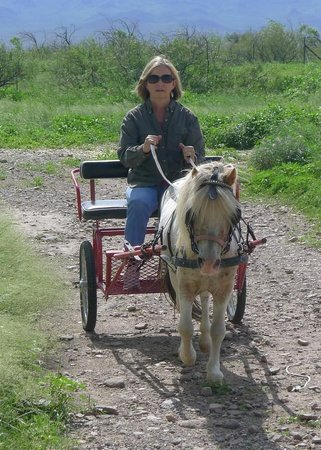 D.D. Gamble Guest Lodge: Anne enjoying her first carriage drive